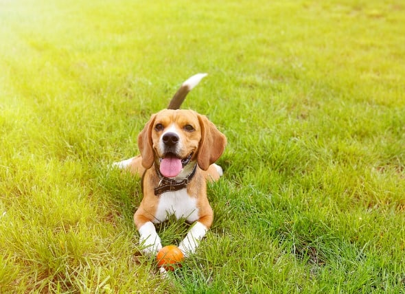 How To Keep Your Dog Cool In Summer?