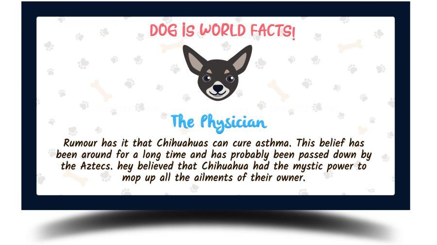 chihuahua fun facts