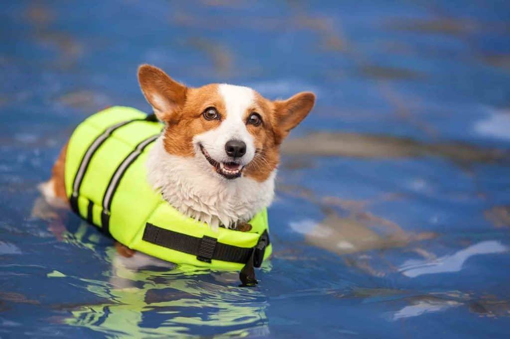 Water-Safety-for-dogs