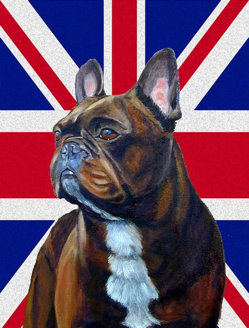 bulldog with england flag