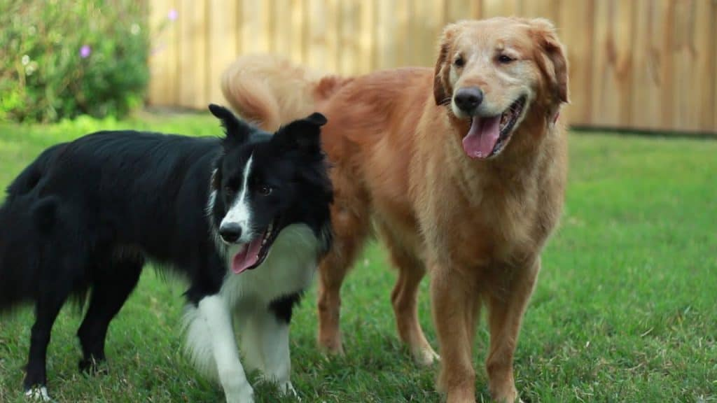 Behavior with Dogs