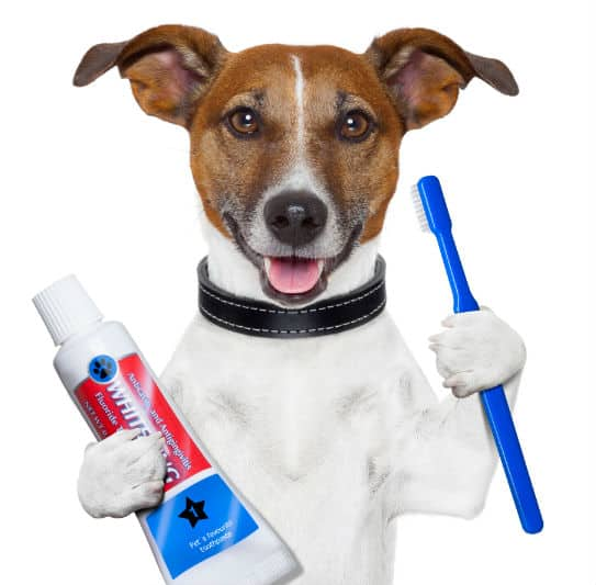 Canine Toothpaste