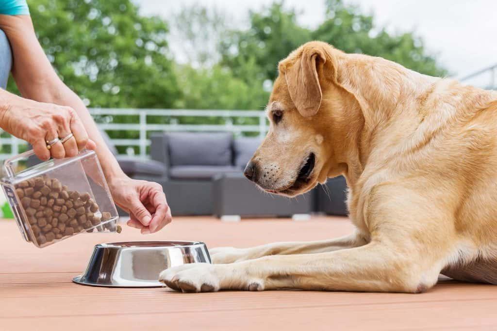 Dog Nutrition Plan