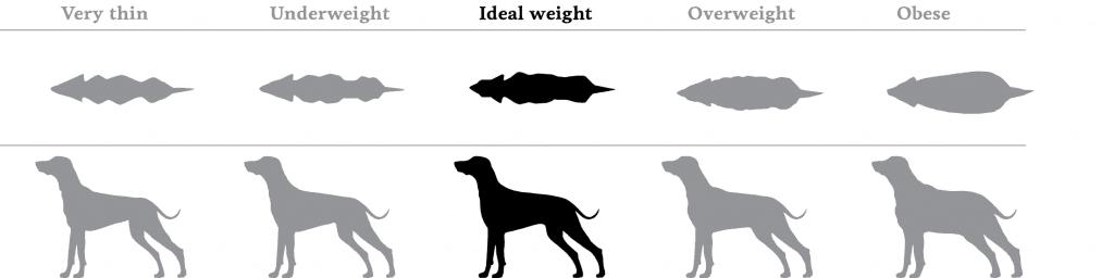 Dog Obesity Chart