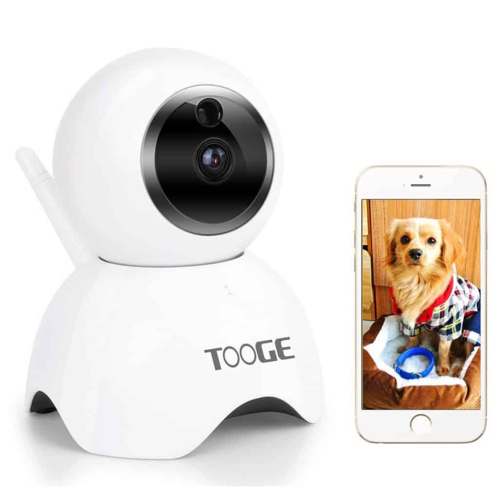 Install A Dog Camera