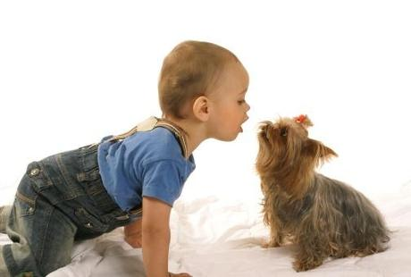 Yorkshire Terrier with children
