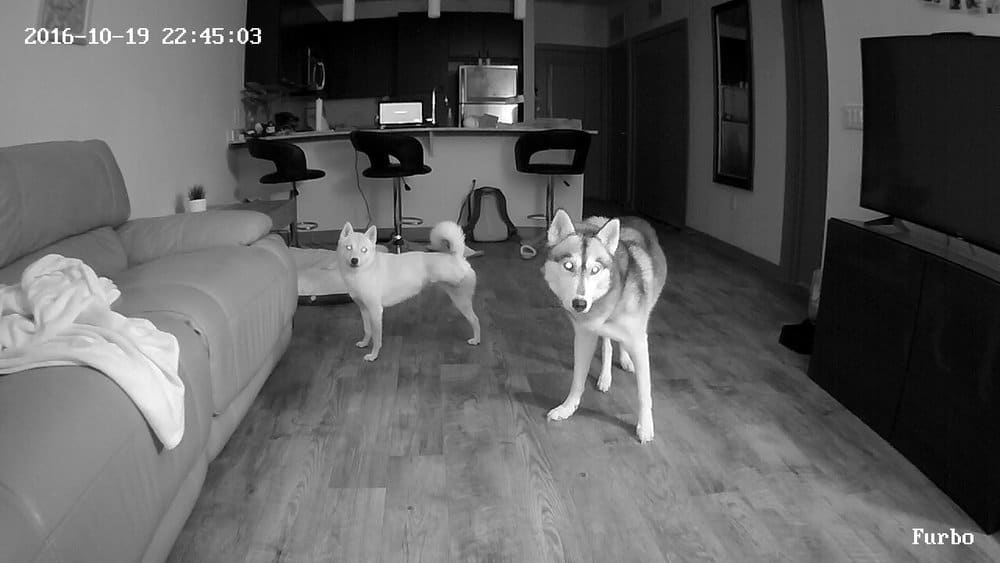 dog camera at home