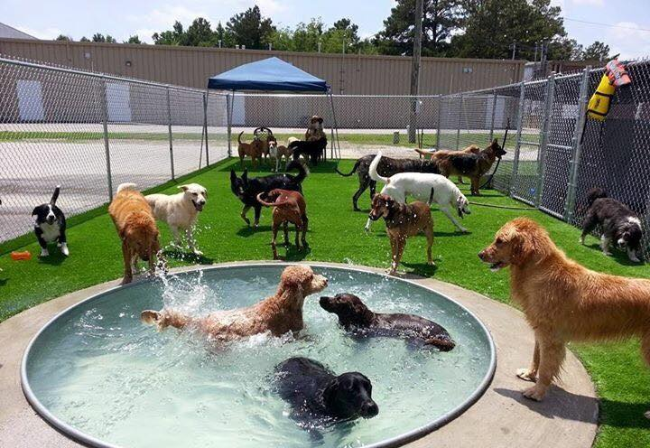 dog playing in pool