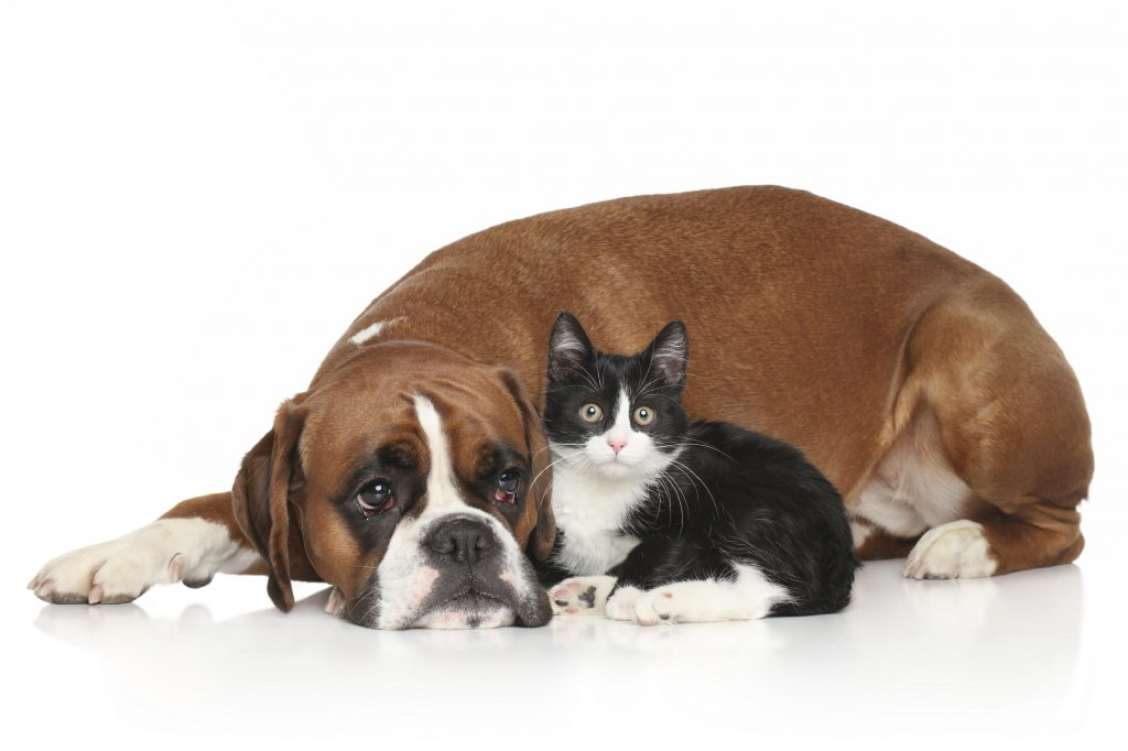 dog with cats