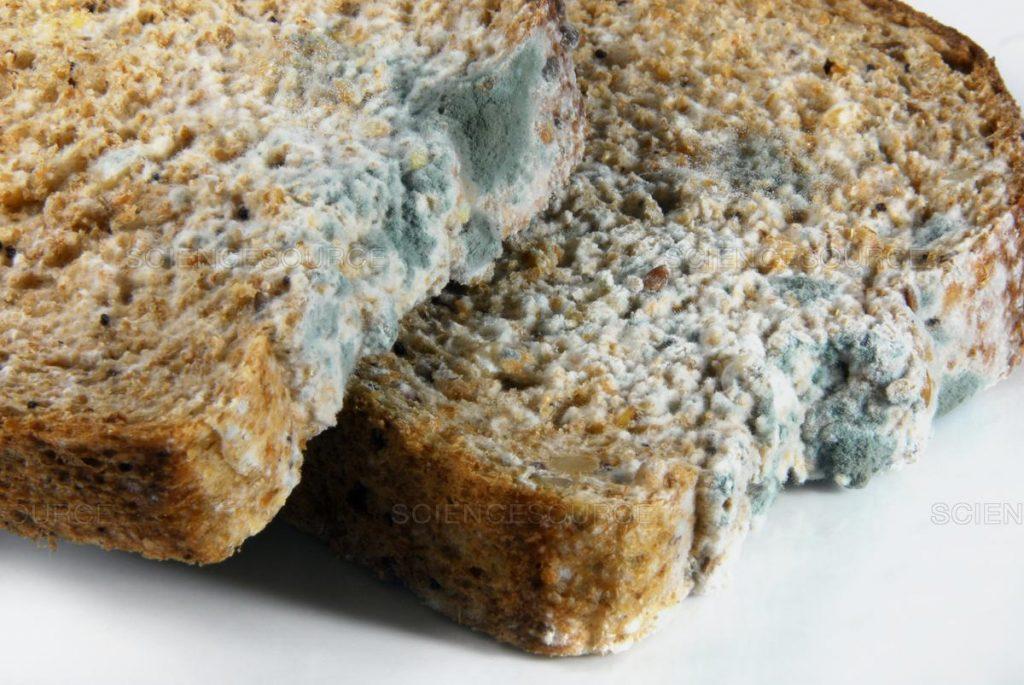 moldy foods