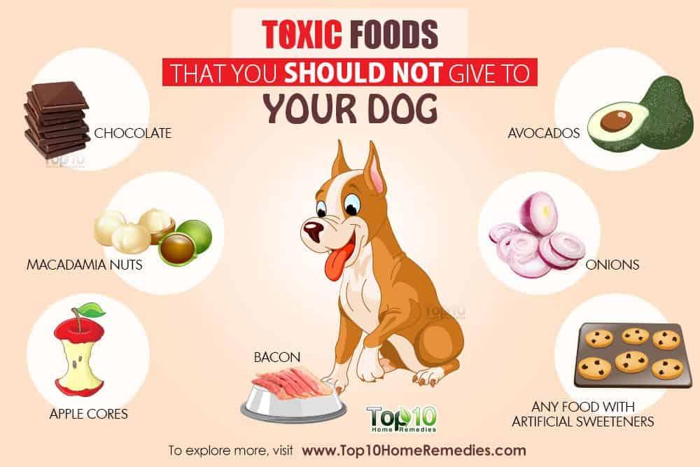 toxic dog foods