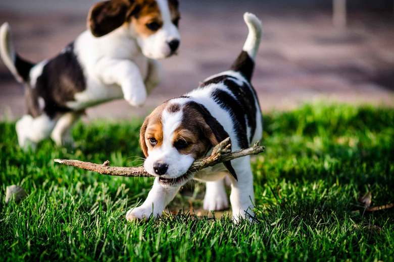 A Brief History Of Dog Breeding