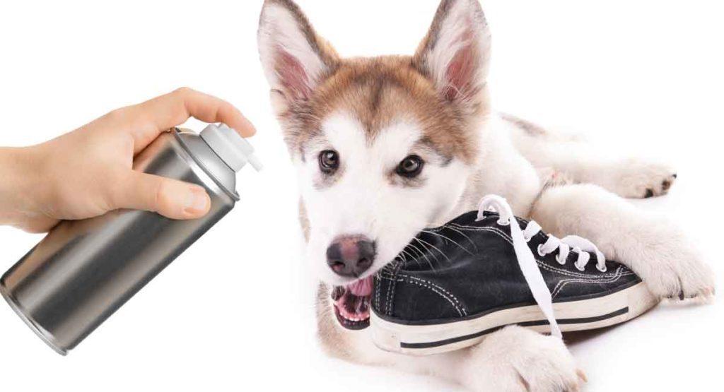 Anti-Chew Spray For Dogs