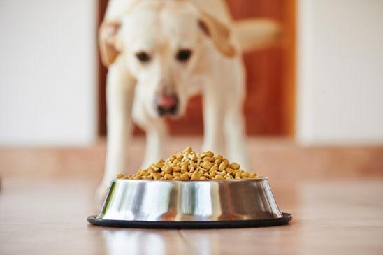 Dog Eating Bowl