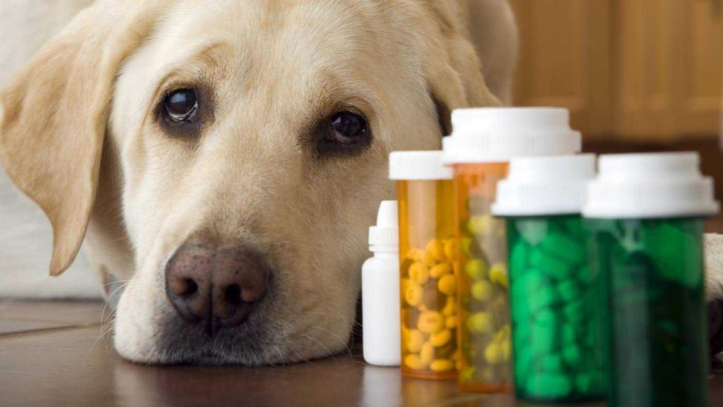 Dog Medicines