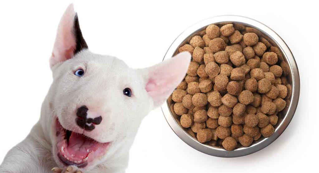Feeding Bull Terriers