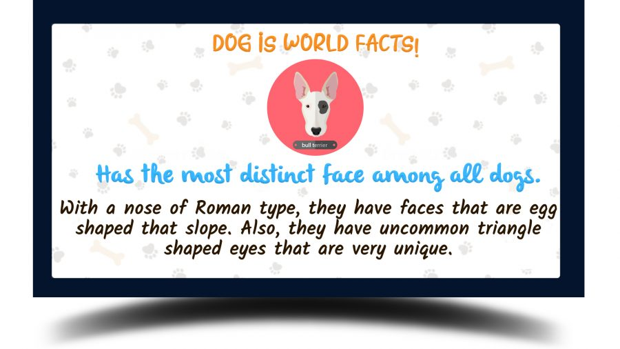 Bull Terrier fun facts