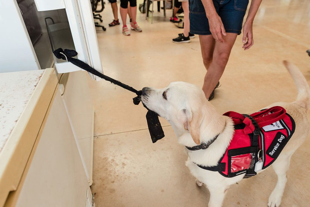 Mobility Assistance Dogs