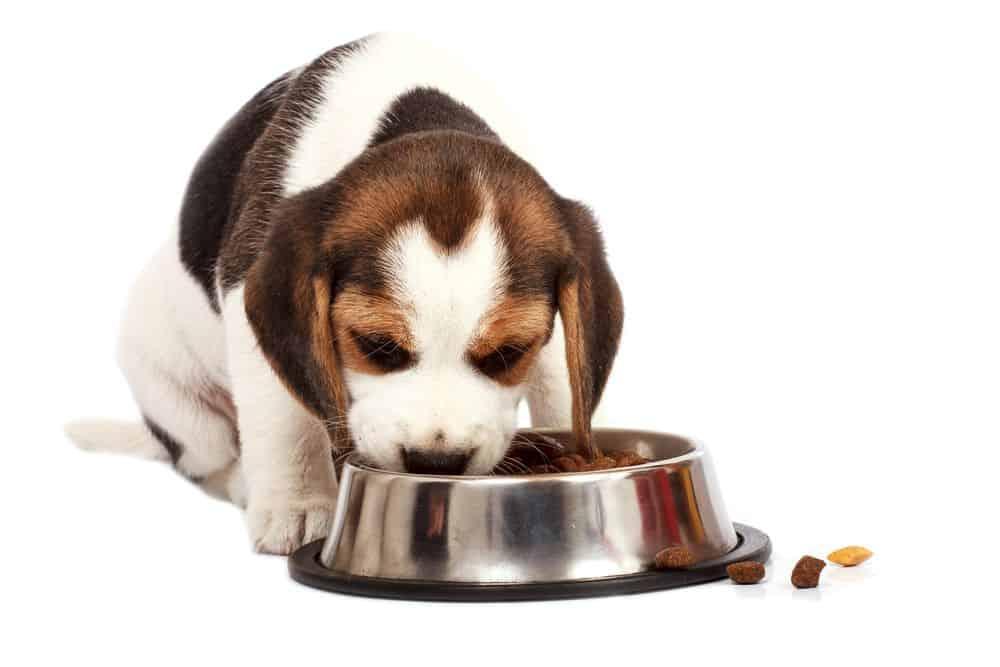Puppy Feeding