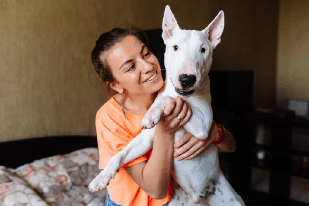 bull terrier with human