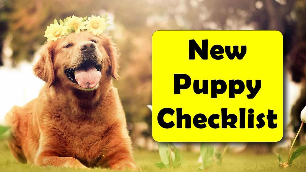 New Puppy Checklist 30 Things You Need To Get Complete Guide