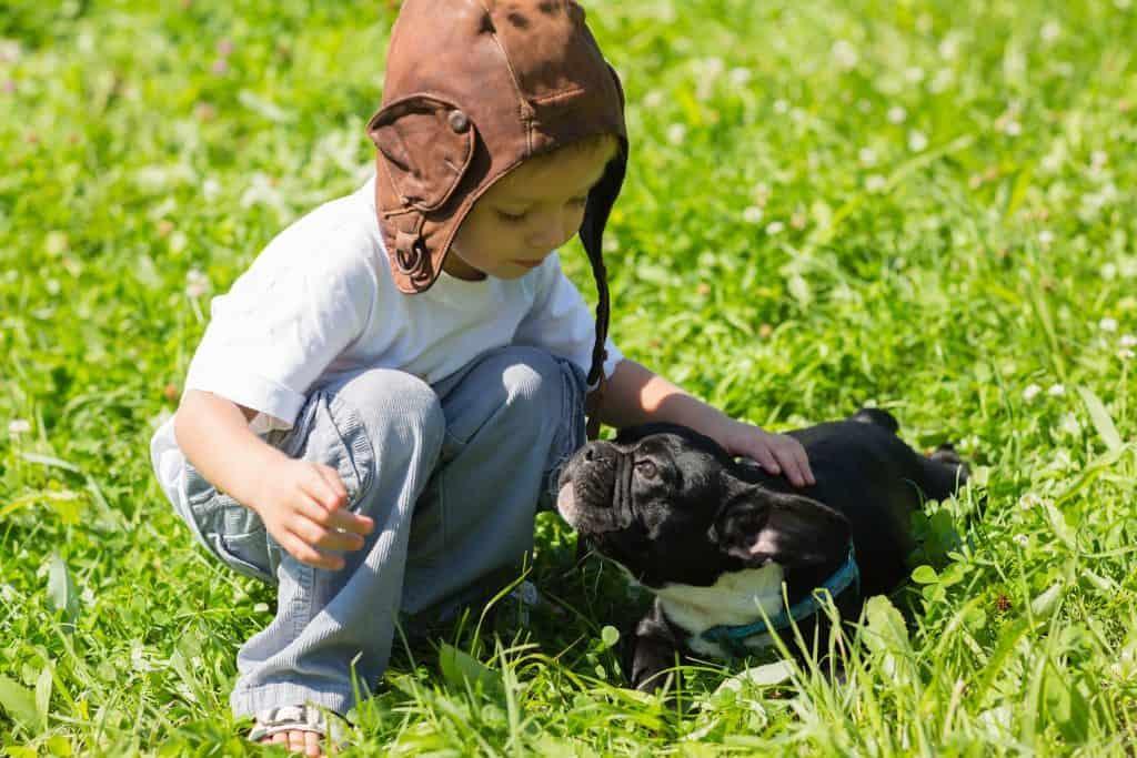 French Bulldog with children