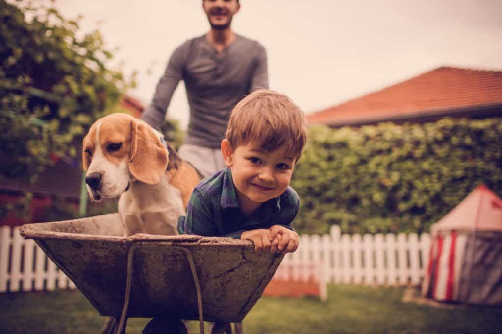 beagle with children
