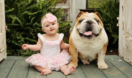 bulldog with children