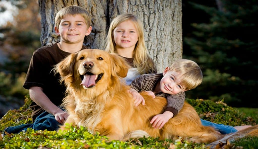 golden retriever with children