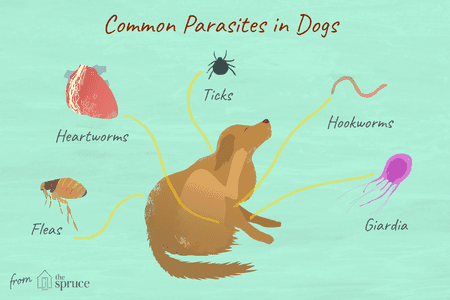 parasite in dogs