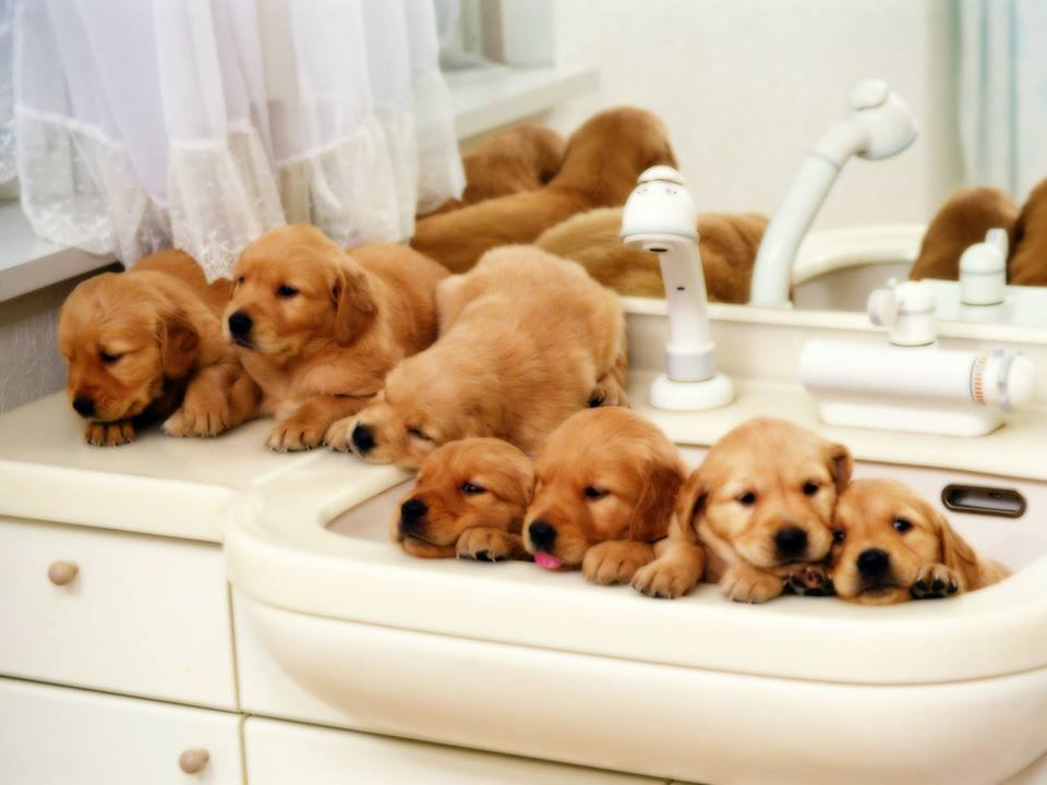 Can You Bathe A Puppy At 8 Weeks Old