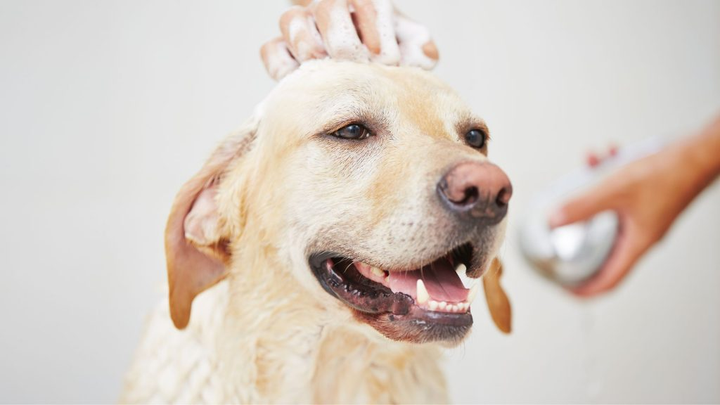 How Often Should You Bathe A Dog?