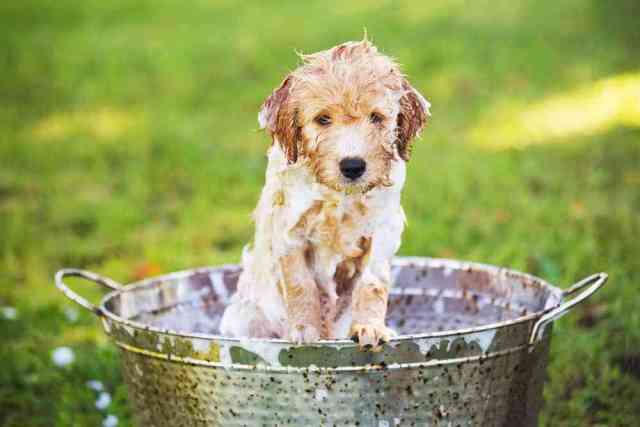 How Often Should You Wash Your Puppy