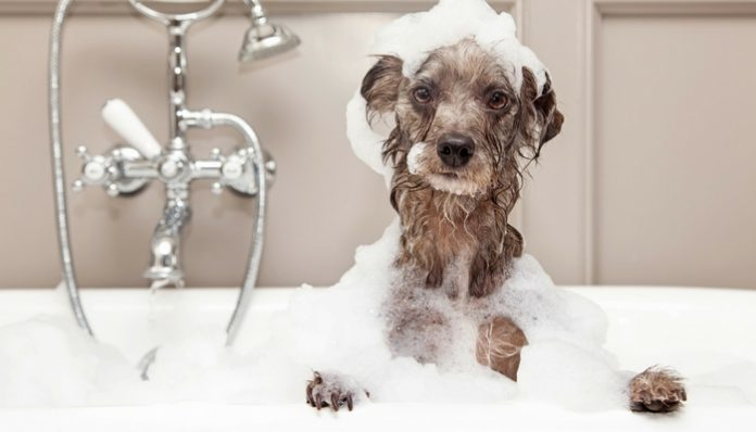 How To Bathe A Dog?