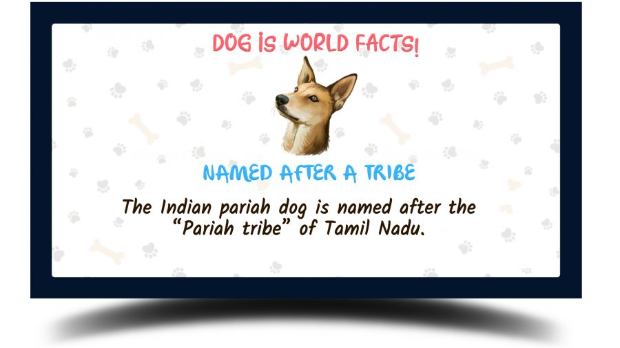 Indian Pariah Dog facts