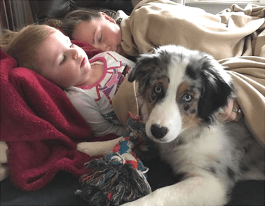 Shepherds are kid-friendly dogs