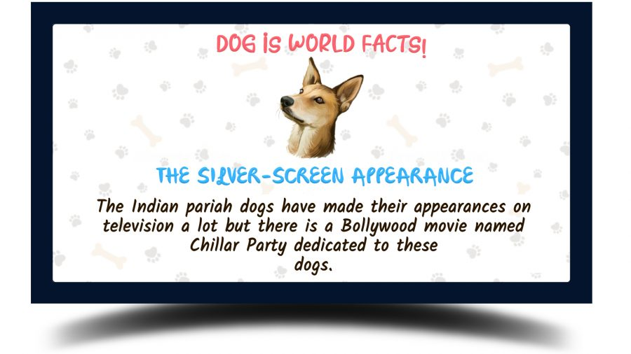 Indian Pariah Dog facts