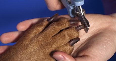 Bullmastiff Grooming