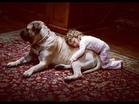 Bullmastiff Behaviour