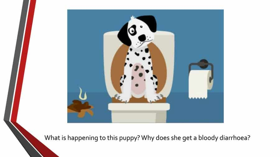 Blood in Dog Stool