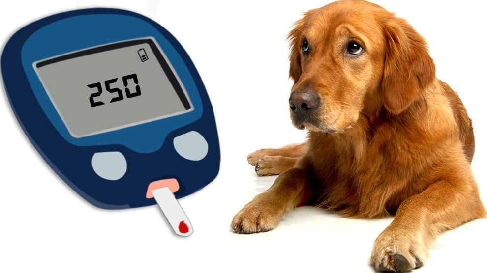 10 Best Diabetic Dog Food Brands: Diet