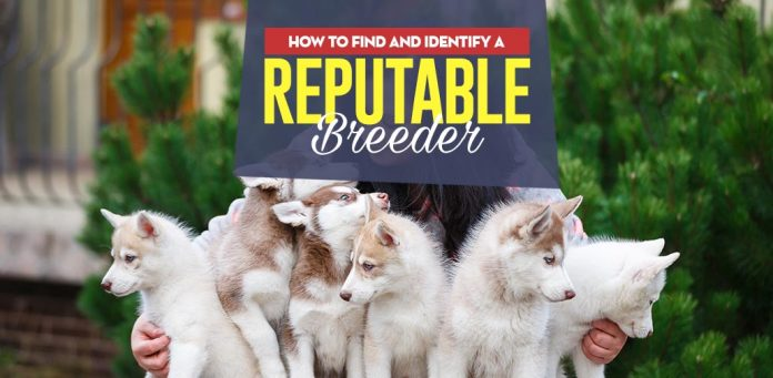 Finding a reputable breeder