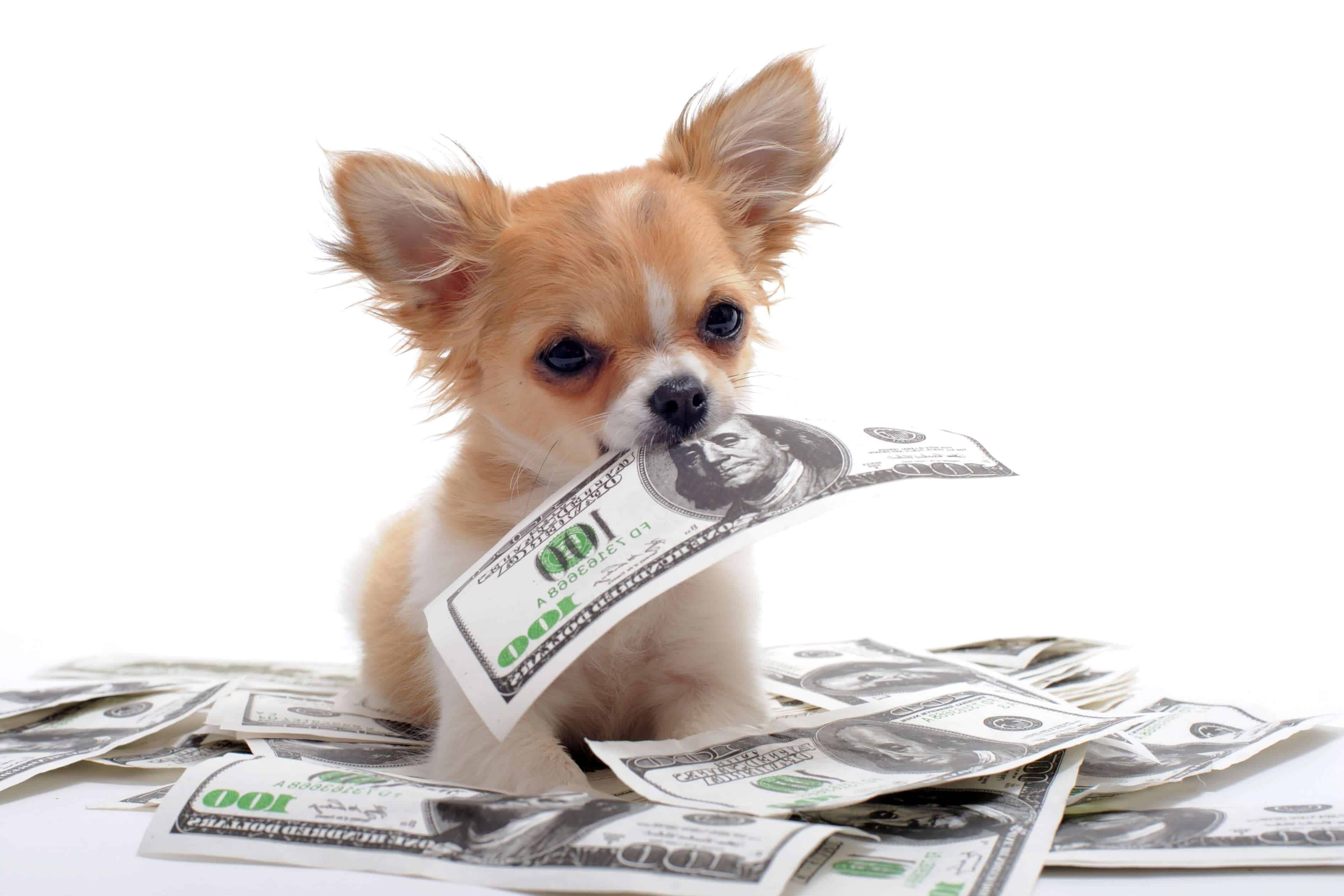 Dog Price List In India Large Medium Small Dogs 2020