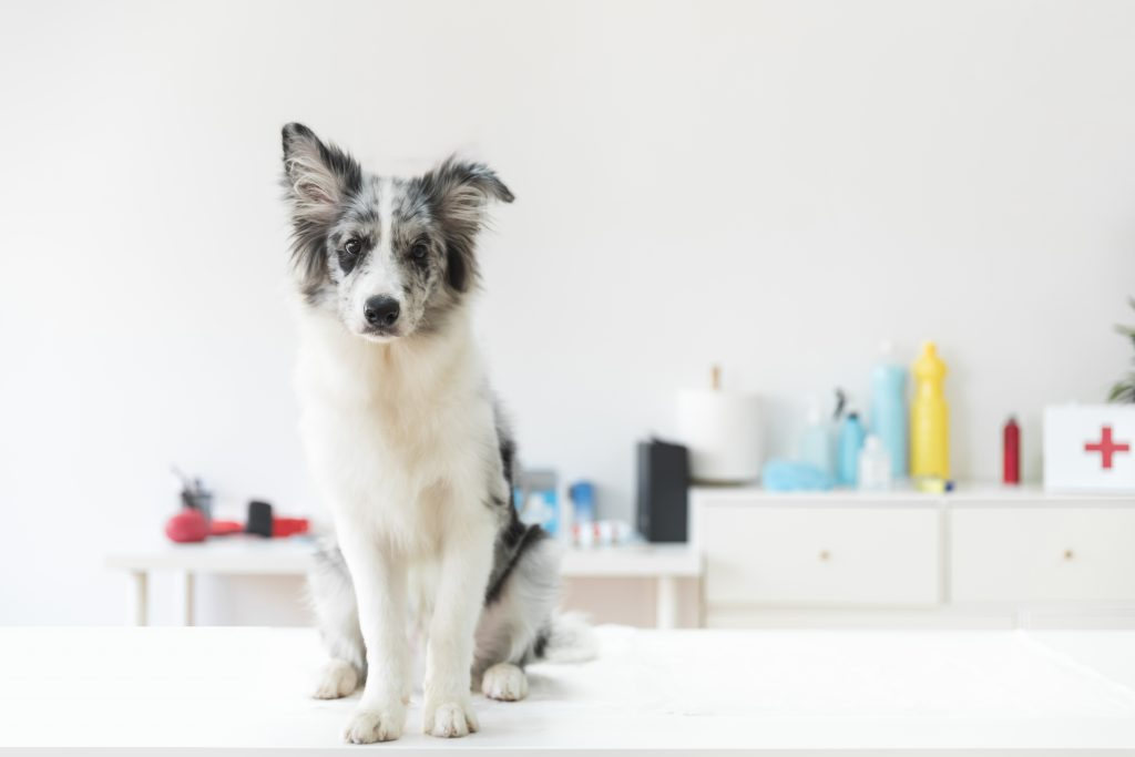 Breeds That Are Prone To Allergies?