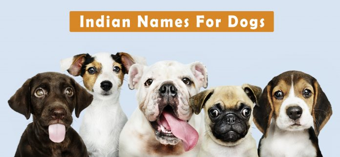 Indian Names For Dogs