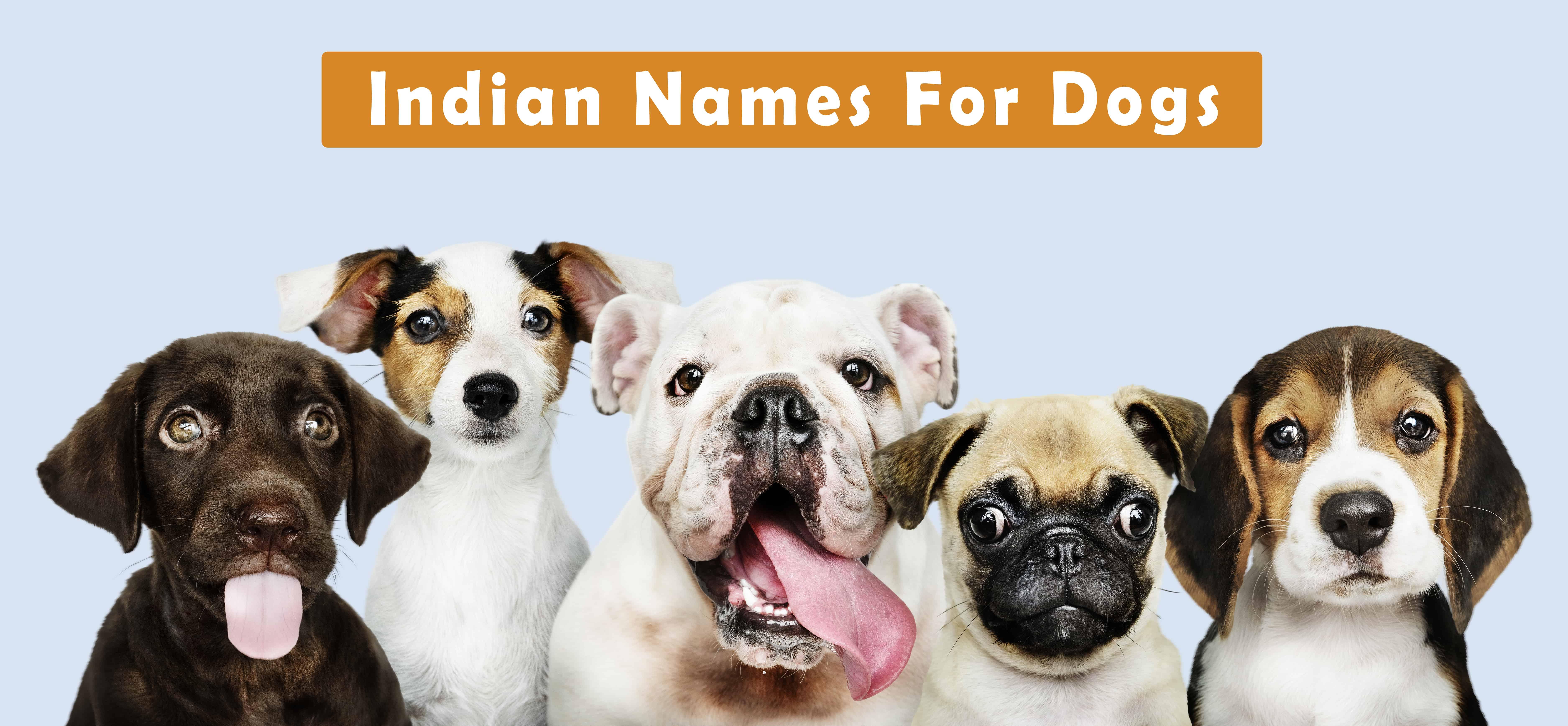 Kannada your in cute nicknames for 10 girlfriend 10 Cute