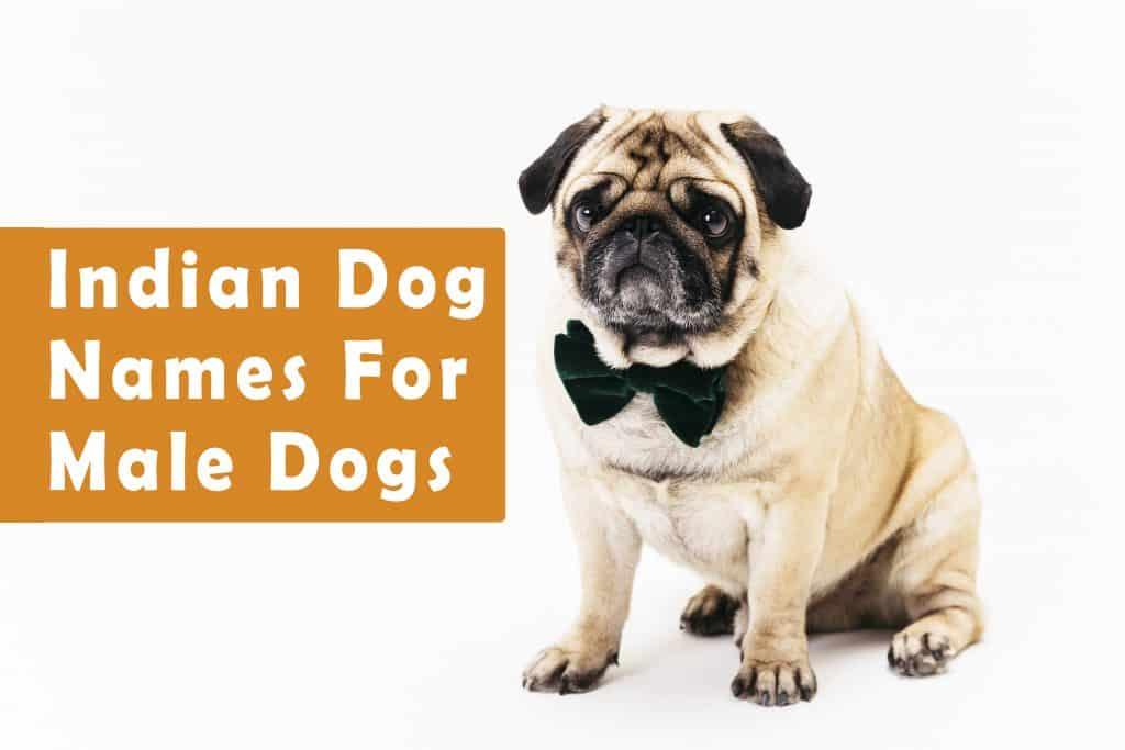 Indian Names For Dogs Funny Cute Hindi Tamil Telugu Marathi Punjabi