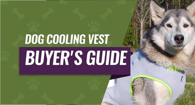 best cooling vests