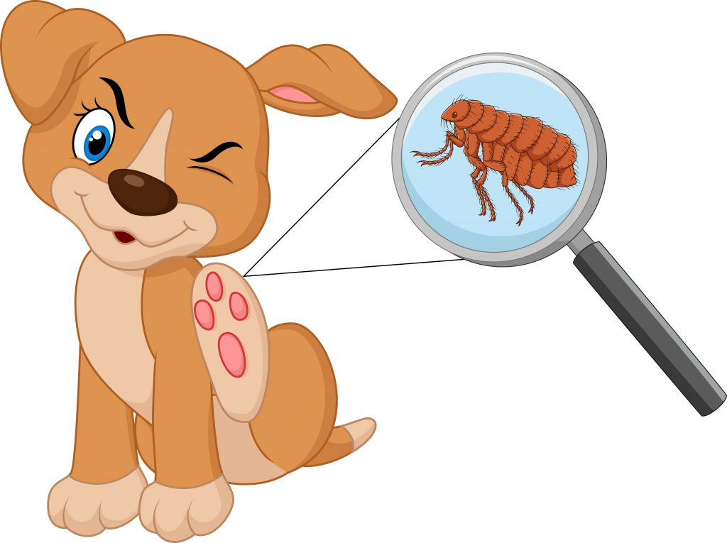 What Are Fleas in dogs