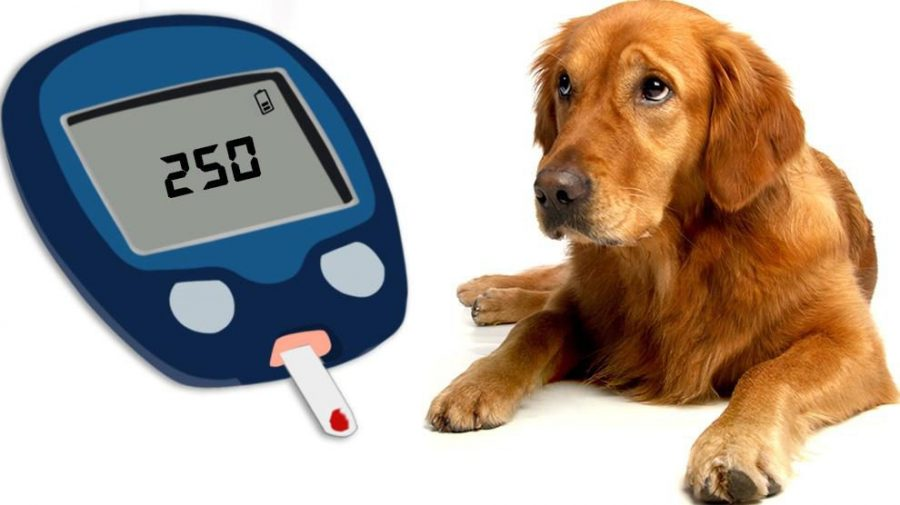 What is Diabetes in Dogs?